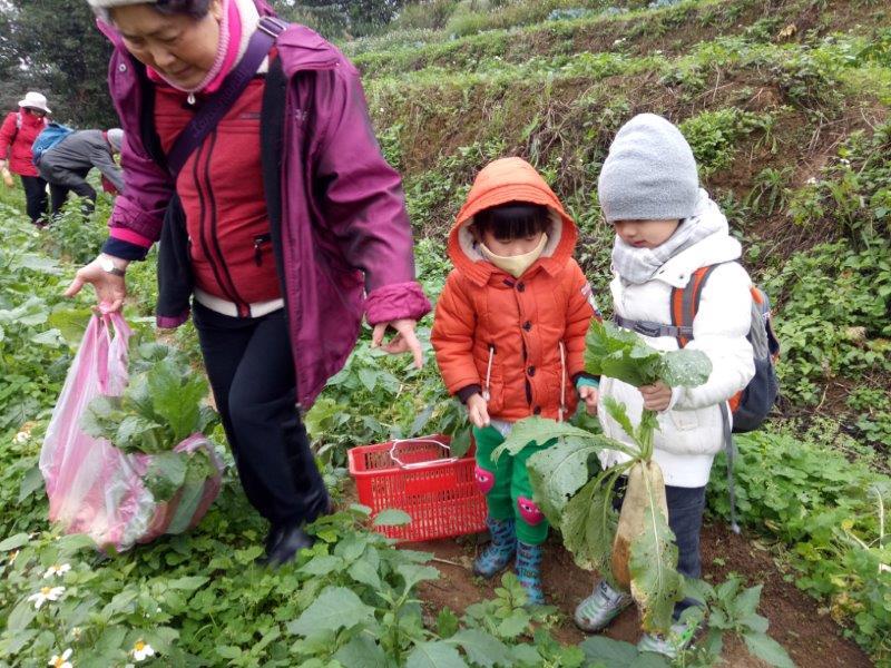 老小在觀光農場快樂拔蘿蔔