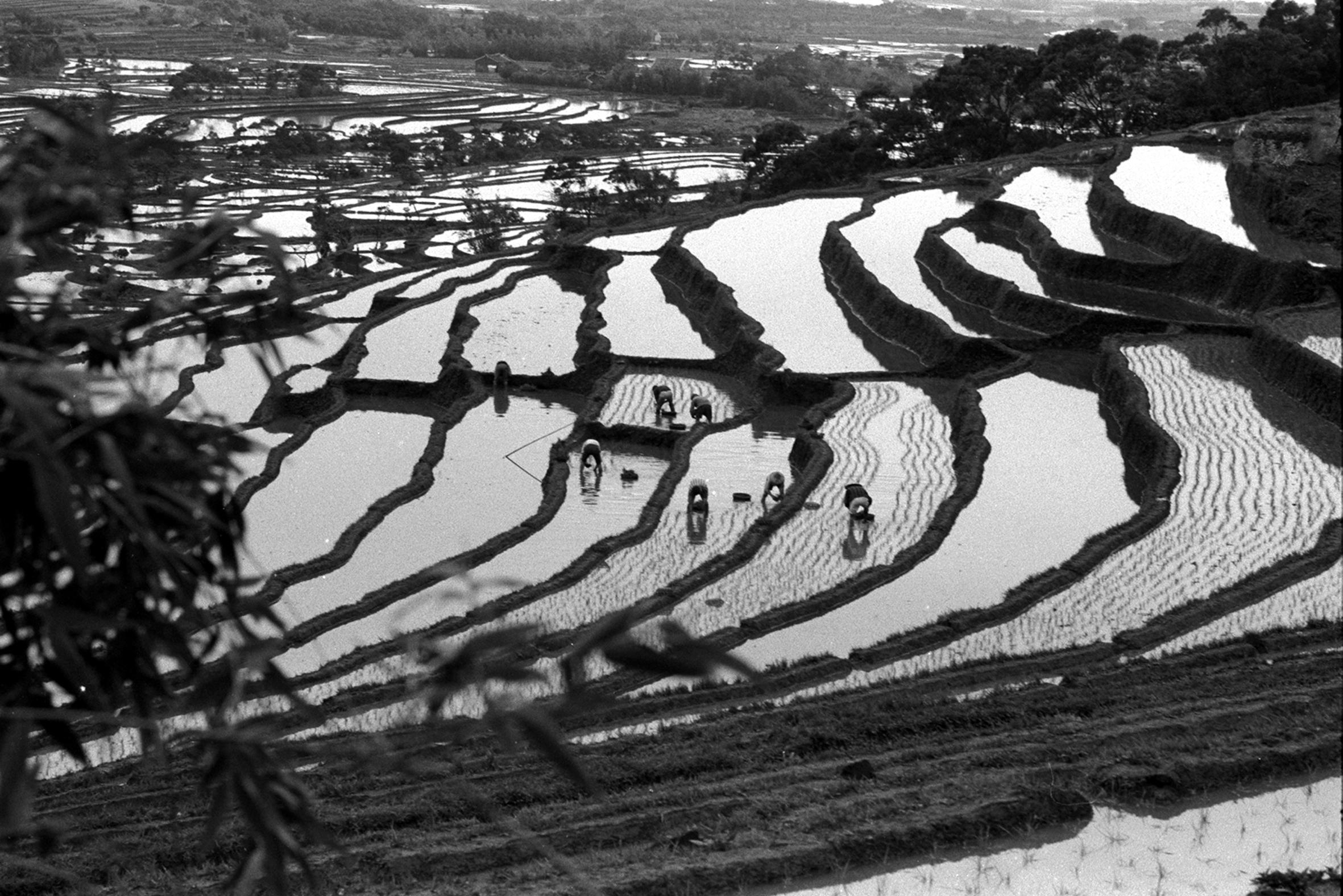 農村之美08-蔡坤煌醫師攝影作品