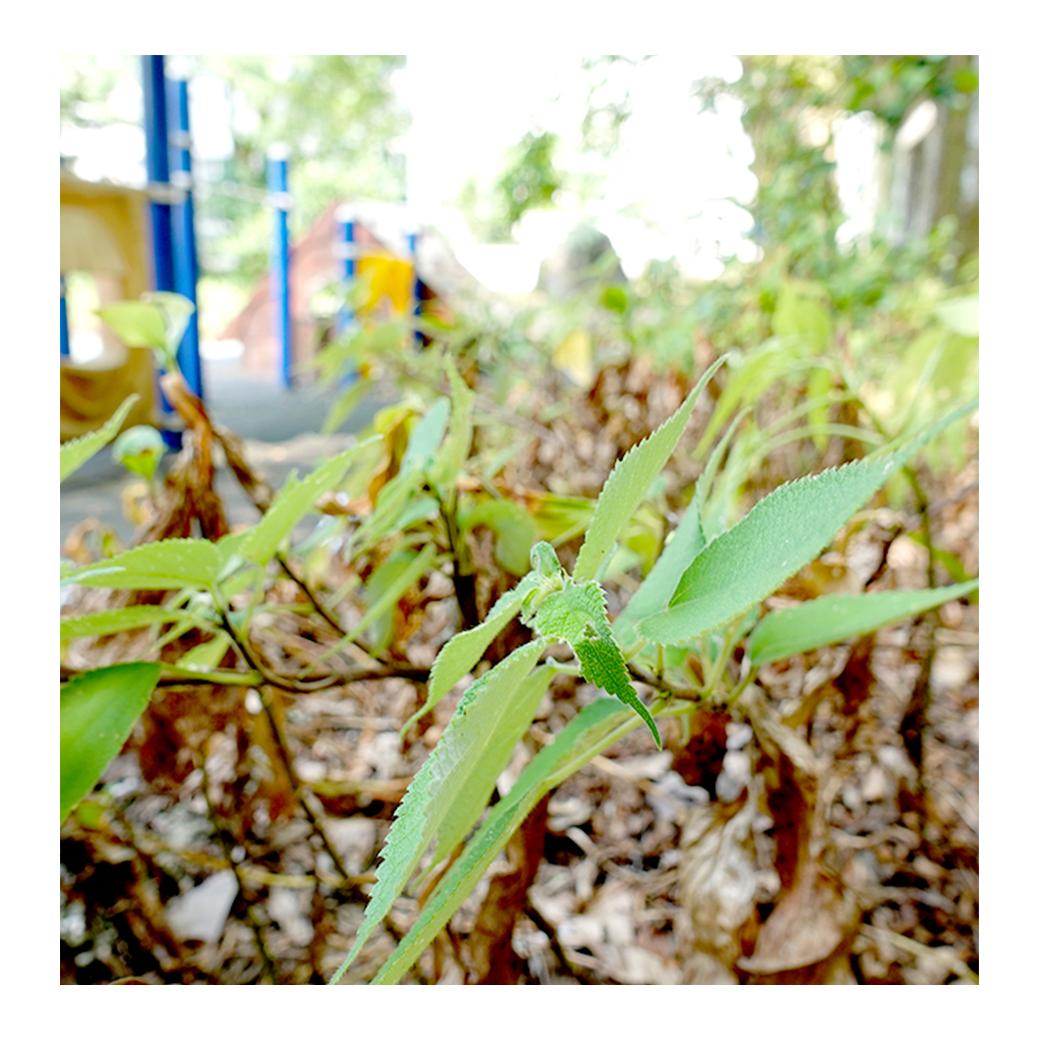 校園裡美麗的植物