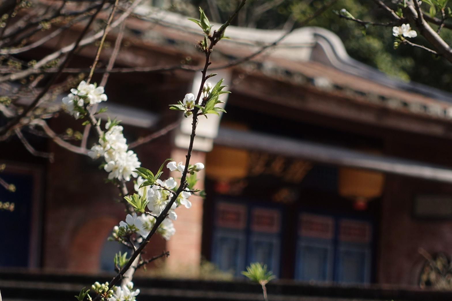 不入林園怎知春色如許?「春日小園」帶您找到專屬春天!